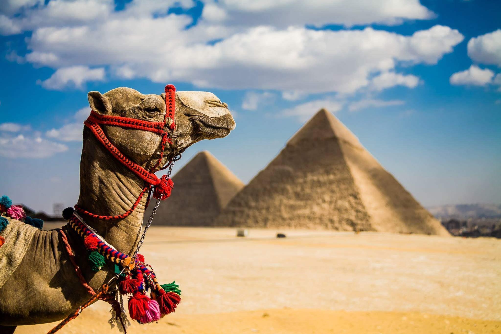 Все о стране Египет - Полное описание - Авантаж-тревел