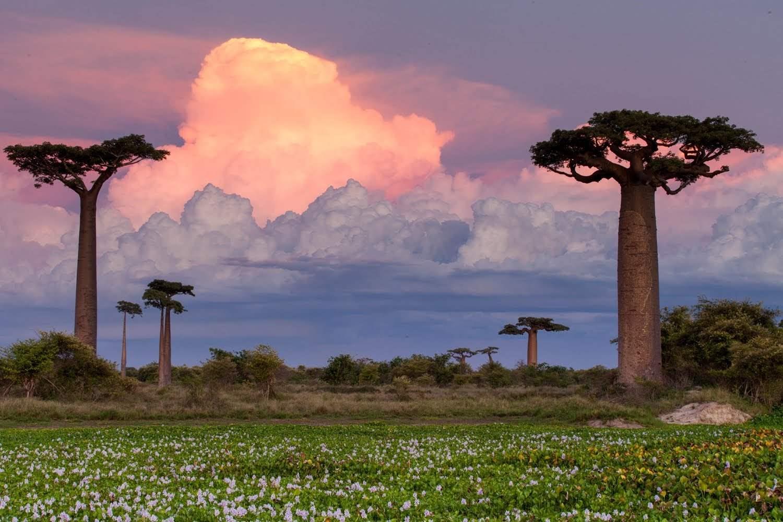 все о стране Мадагаскар - Полное описание - Авантаж-тревел