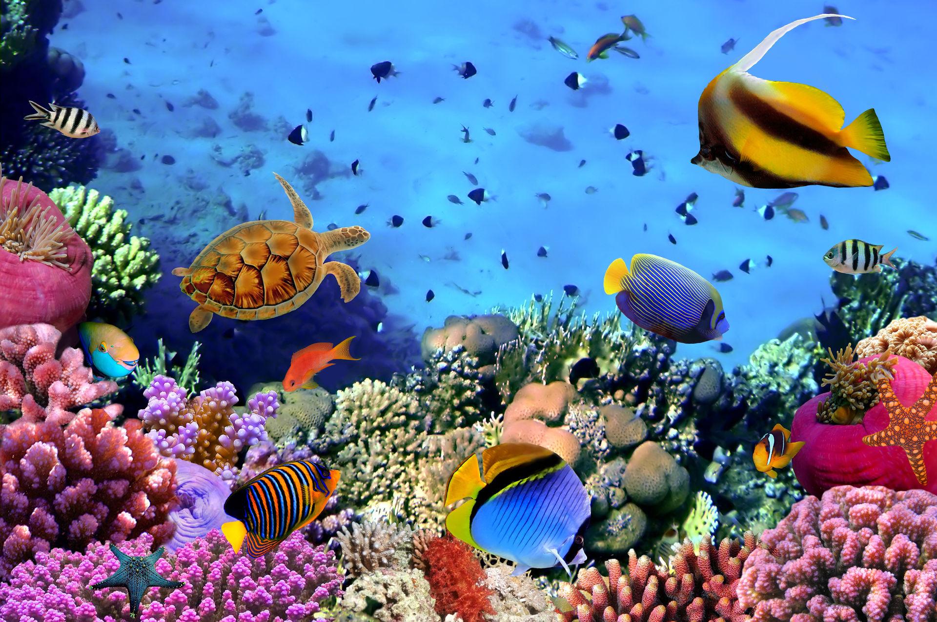 Шаркс-Бей - Описание Шаркс-Бей, пляжи, отели, отдых, развлечение - Авантаж-тревел
